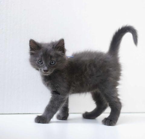 Очаровательные котята ищут новый дом