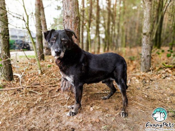 Łagodny, spokojny, duży pies Romek do adopcji!