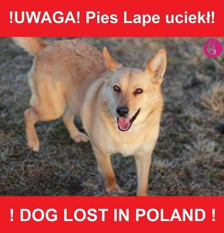 Zaginęła suczka - Wielkopolska - Sędzinko - Buk - Cała Polska