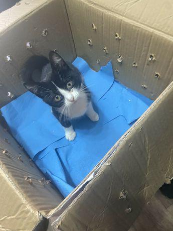Кмітливе кошеня шукає домівку!