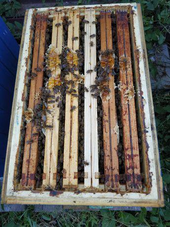 Odkłady pszczele ramka wielkopolska warszawska poszerzana
