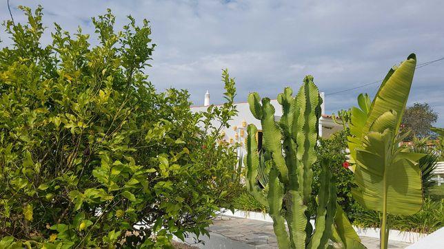 Apartamento só para férias com acesso a jardim em Albufeira