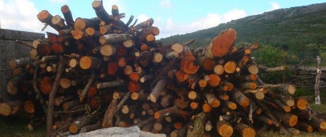 lenha cde pinheiro e eucalipto