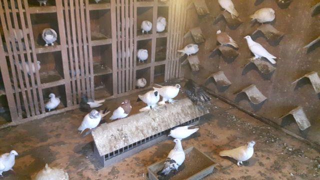Gołębie różne lot