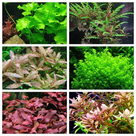 Plantas de aquário - packs low cost (ler até ao fim por favor)