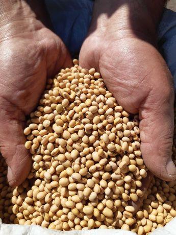 Продам посівну сою Валюта 1-репродукція