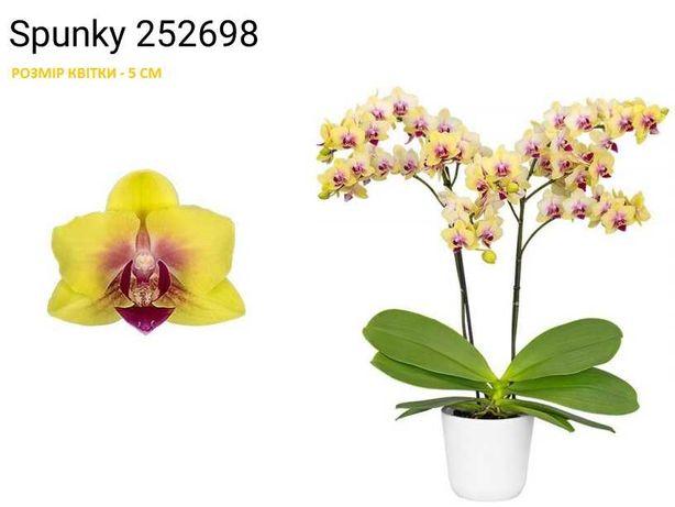 Наборы молодых орхидей