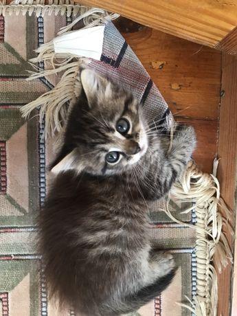 Прелестная ЧУДО-Кошечка