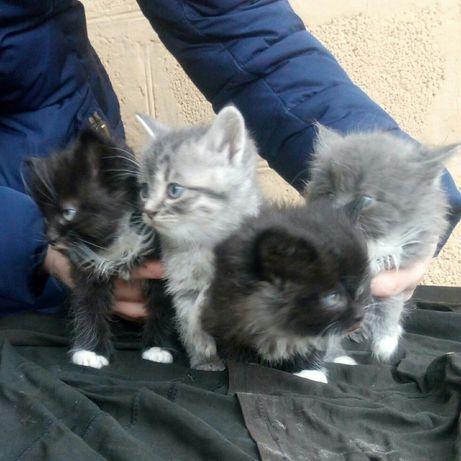 Шикарные котята бесплатно