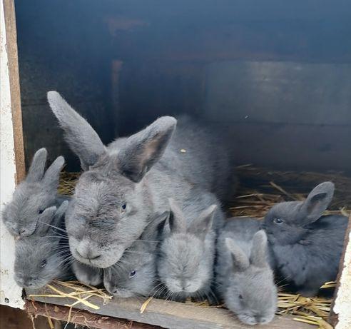 Кролики 200грн и выше.