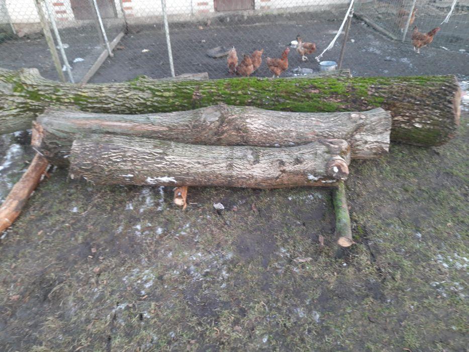 Orzech wloski kłody drzewo pień Tomaszów Lubelski - image 1