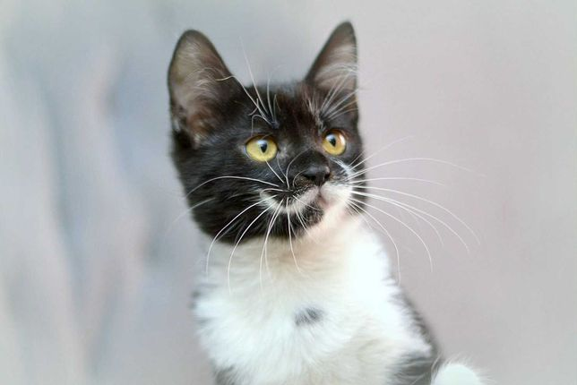 Отдам котенка, девочка, 3 месяца
