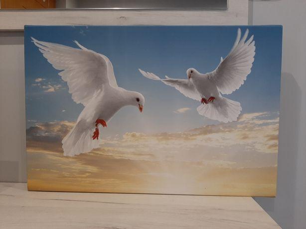 "Obraz ""Gołębie"" na płótnie"