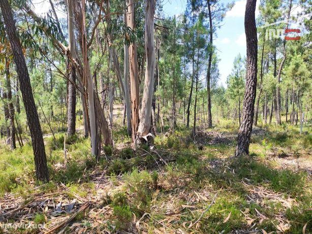 Terreno de charneca, com alguns pinheiros e eucaliptos.