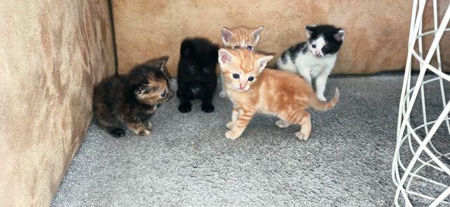 Oddam kotki w dobre ręce za darmo