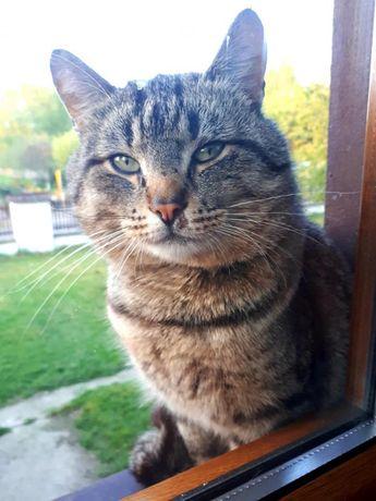koty adopcja aktualne