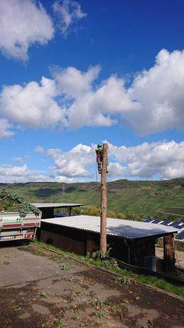 Pielęgnacja i wycinka drzew z użyciem technik alpinistycznych