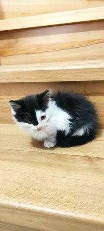 Красивый котенок, 3 месяца.