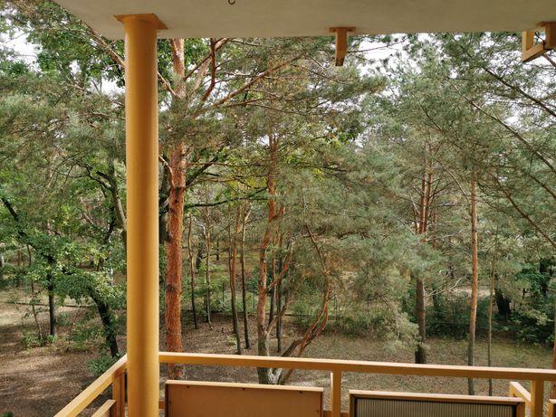 3-pokojowe mieszkanie w Fordonie z widokiem na las