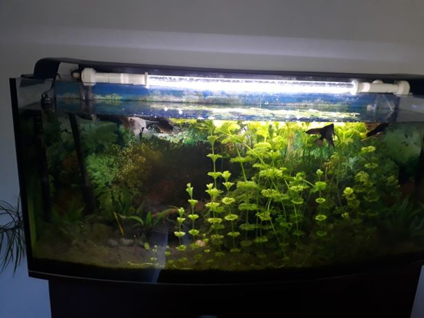 Akwarium 240l+wyposażenie-Okazja
