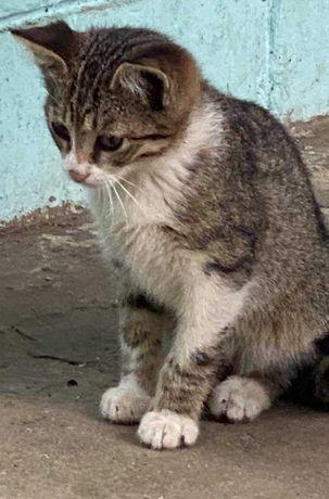 Котята.Отдам девочку котенка 14.02.2021.г.р.