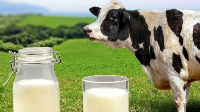 Домашнее молоко при первой покупке скидка -50%