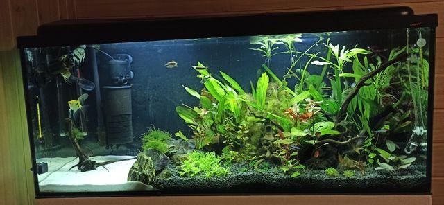 Akwarium 240l cały zestaw butla CO2 filtry szafka