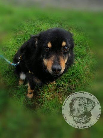Czarek, śliczny mały pies do adopcji