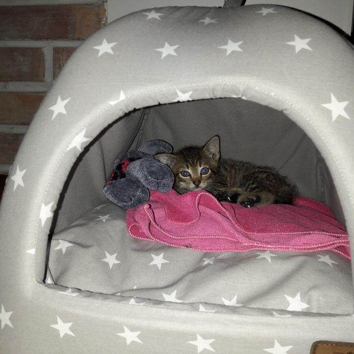 Kotek szuka domu Wieliszew - image 1