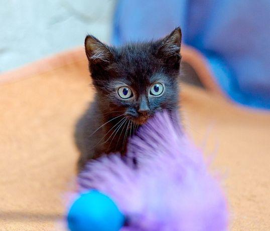 Чудесная черная кошка Панти ищет дом (1,5 месяца, котенок)