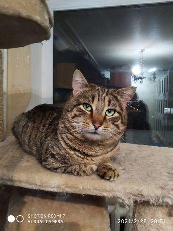 Адонис красавец кот