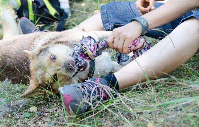 CZOKO-husky, łajka - fajny pies dla fajnych ludzi