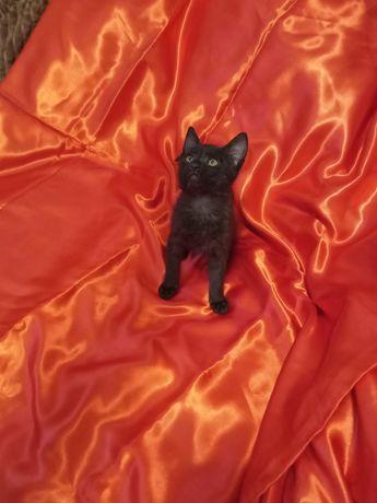 Котята ищут новую семью