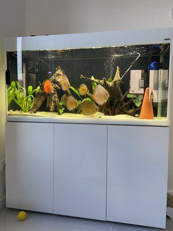 Akwarium aquael glossy 120 260l + zestaw paletki dyskowce
