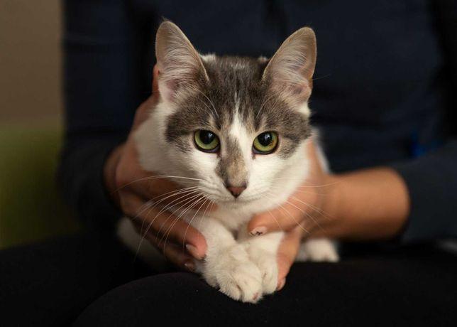 Кошка стерилизованная