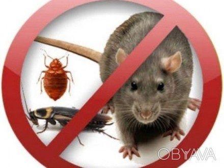 СЭС Уничтожение тараканов, мышей, клопов!Кропивницкий и область!