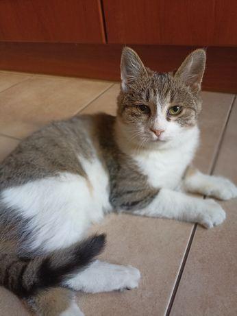 Котенок,  кошечка 3,5 мес. В хорошие руки,  отдам котенка.