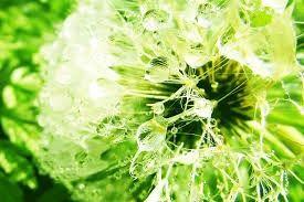 Адьювант-смачиватель для растений AgroGold.