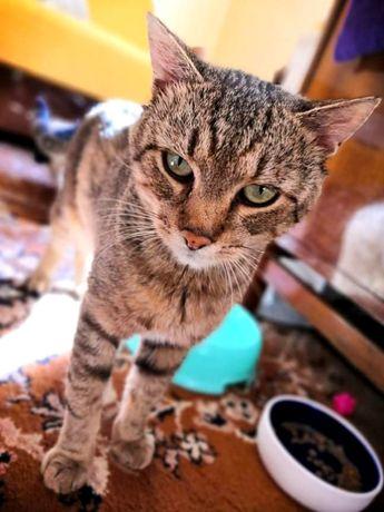Zielonooki cudny domowy kotek Tygrys do adopcji. Odrob. Szczep. Kastr.