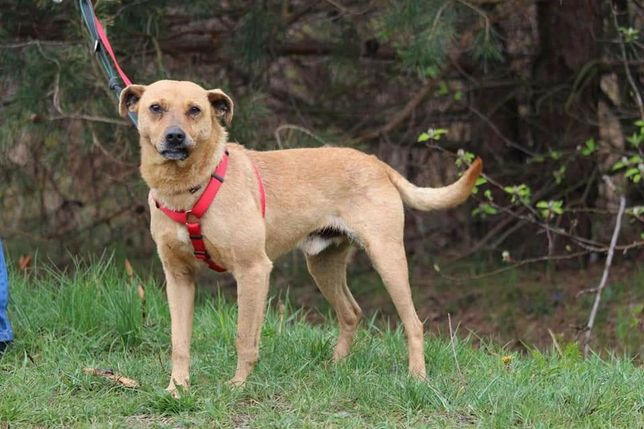 Za darmo adopcja psiak wykastrowany szuka domu czytaj opis