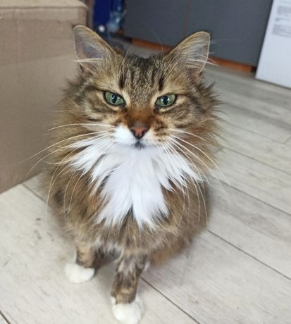 Добрая умная кошка 1 год стерилизована