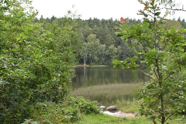 REZERWACJA Działka rekreacyjna nad jeziorem Bieszkowice