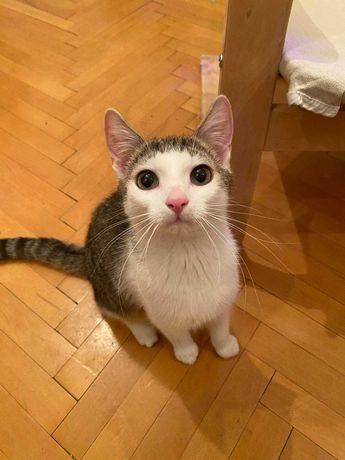 Uroczy kociak Karolek szuka domku! Pokochaj i adoptuj