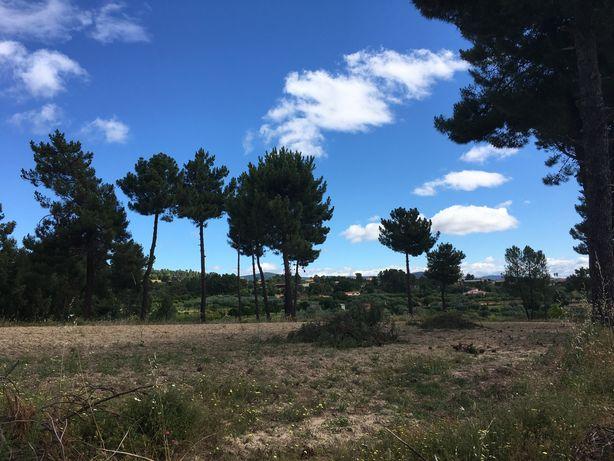 Terreno em Atalaia do Campo