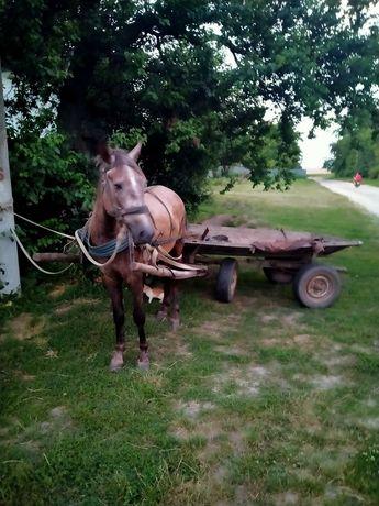Конь, лошадь, кобыла