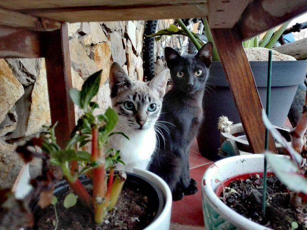 2 gatinhos bébés 4 meses para adopção