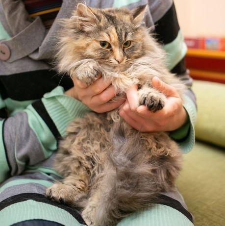 Пушистый пестрый котенок ищет дом, 8 мес, кошечка