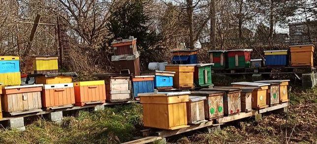 Pszczoły Odkłady pszczele ramka wielkopolska