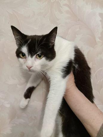 Милый котик в хорошие руки бесплатно. Котенок даром. Срочно.