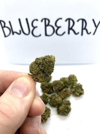 Susz CBD 10g Blueberry hurt/detal